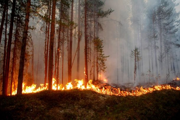 Fire burns in Karbole, Sweden, on July 15, 2018.  Due to the dry weather, 80 wildfires burned in Sweden. / AFP PHOTO / TT News Agency / Mats ANDERSSON / Sweden OUT