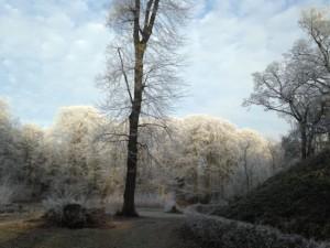 In de bossen van Heiloo vanochtend (bron: Miranda Zonneveld).