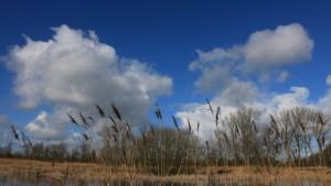 Zonneschijn en stapelwolken in Wolvega (bron: Martin Vye).