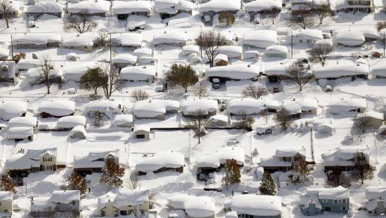 Buffalo bedolven onder een gigantisch pak sneeuw!