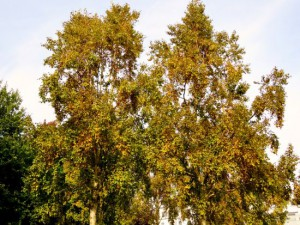 De bomen beginnen te kleuren (bron: Ton Wesselius).